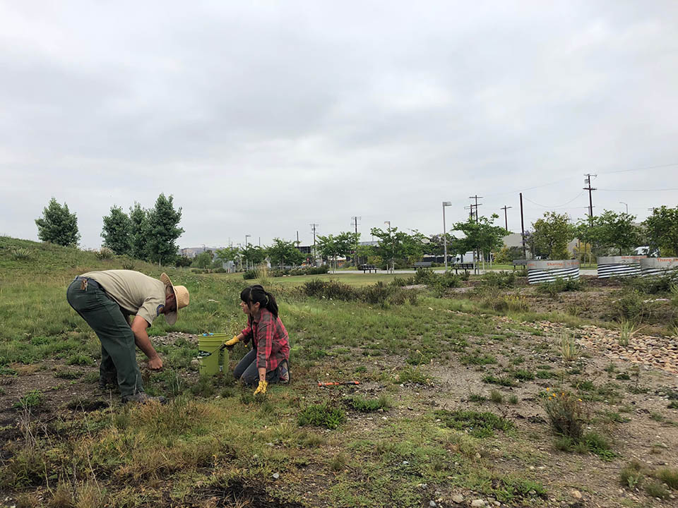 <p>Today anyone can enjoy the park&rsquo;s abundance of programs, like habitat restoration with Weed Warriors pictured here. The park boasts a unique community outreach model &ndash; Promotorx &ndash; which certified fifteen community members as volunteer interpreters and park advocates to organize programs for their communities. Inspired by a Latin American health initiative, the Promotorx program engages and empowers the surrounding communities to enjoy their park and its resources. Melissa admits it&rsquo;s the most rewarding part of her job, as she&rsquo;s been able to witness the volunteers grow and benefit from investing in their communities. Shown are <i>LA </i>State Historic Park Community Engagement Coordinator Luis Rincon and volunteer Becky Rogers<i>.</i><b></b></p>